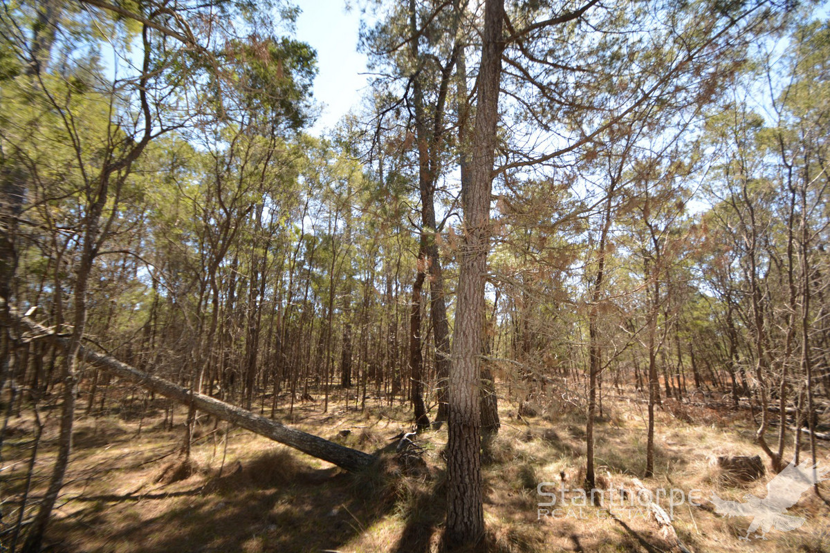 SUGARLOAF – 5 ACRE EX-FORESTRY BLOCK – PERFECT NORTHERLY